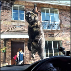 Cat on Windscreen