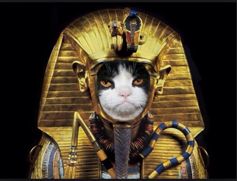 Egyptian Pharaoh Cat