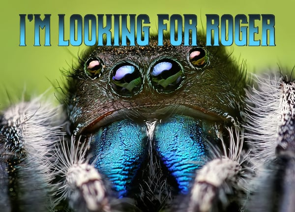Spider is looking for Roger