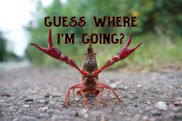 Crawfish going up the hill
